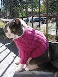 Cats love sweaters