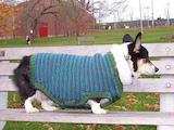 «Doggy