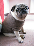 Pug Dog Sweater